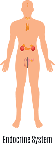 endorcine surgery involved the endocrine system